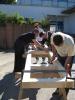 Aufbau einer Boulderwand am BFZ_18